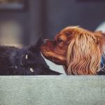 Mascotas y coronavirus: Pautas de higiene